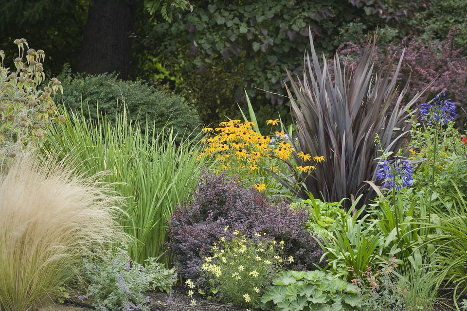 12 best ornamental grasses for landscaping - Garden design using grasses ...