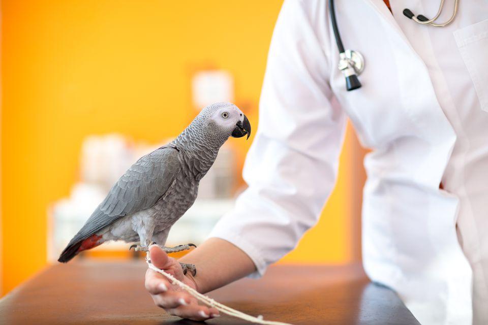 sick bird at vet