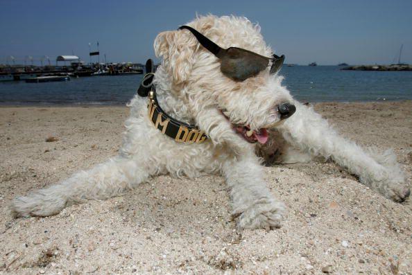 A beach dog on vacation