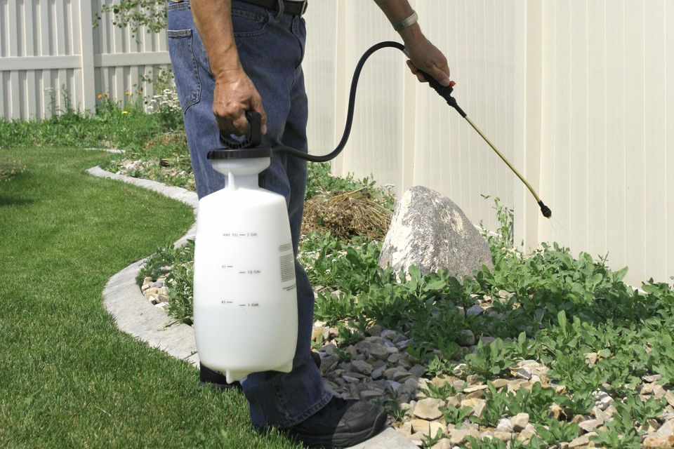 Yard Care - Weeds