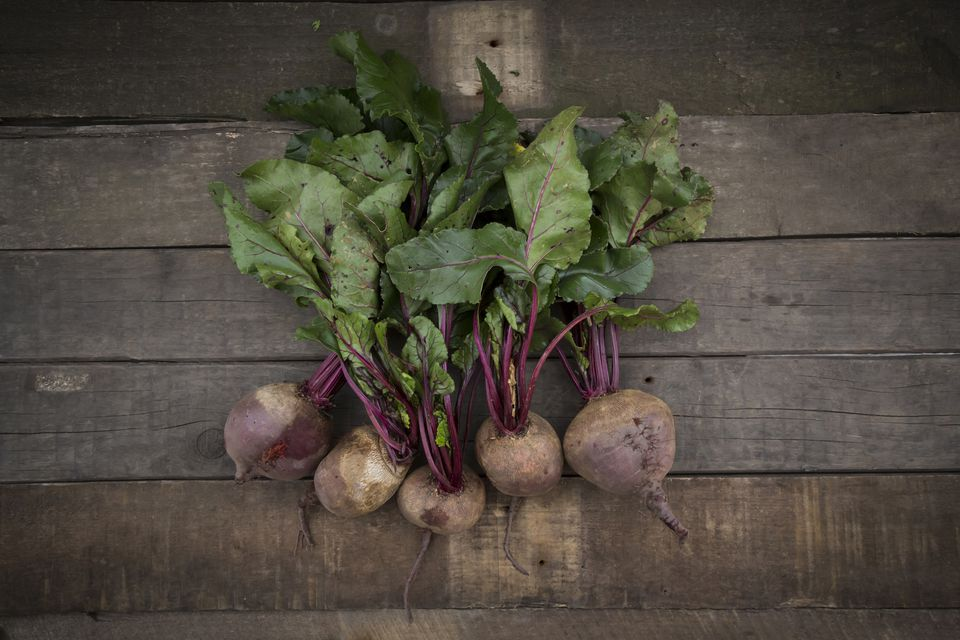 Row of five organic beetroots on dark wood