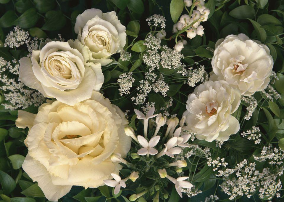Filler flowers for wedding bouquets flowers mightylinksfo