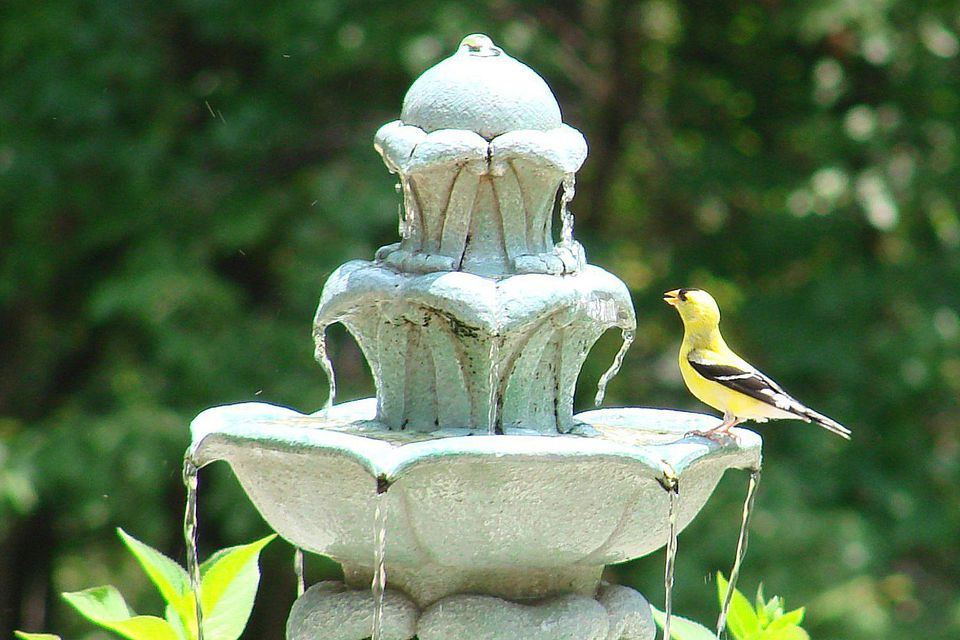 goldfinch fountain 58a6cd683df78c345b485372