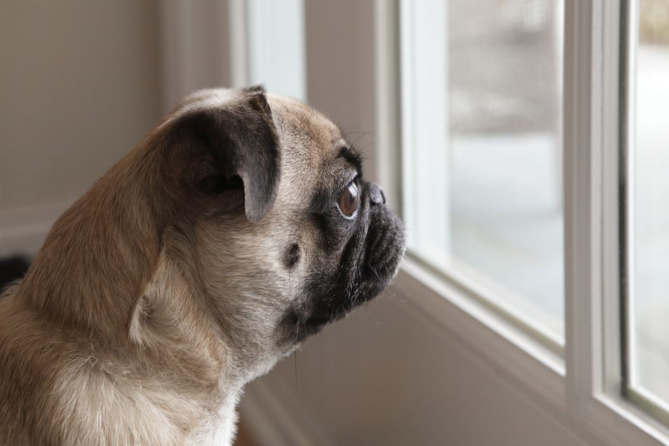 10 Things Dogs Hate That People Do