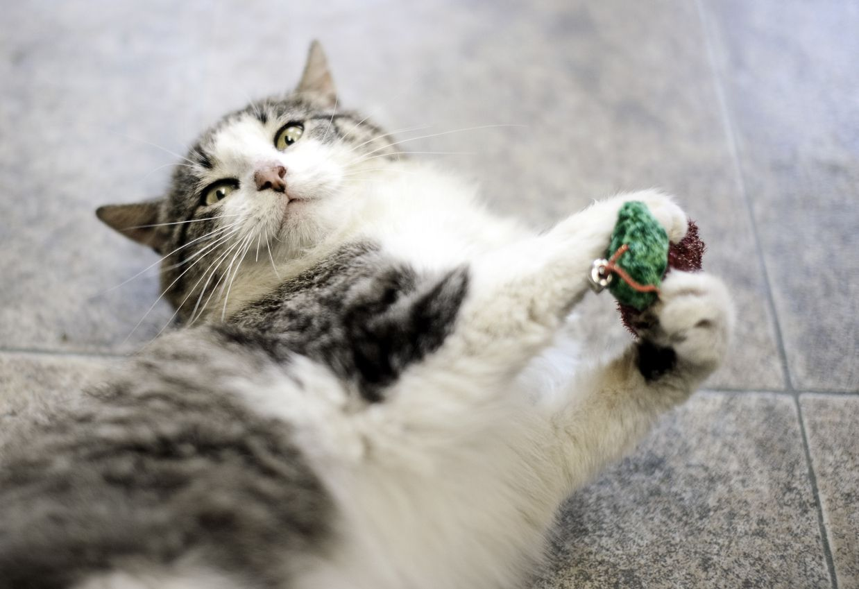 9 toys to keep cats happy when they 39 re home alone for Swimming fish cat toy