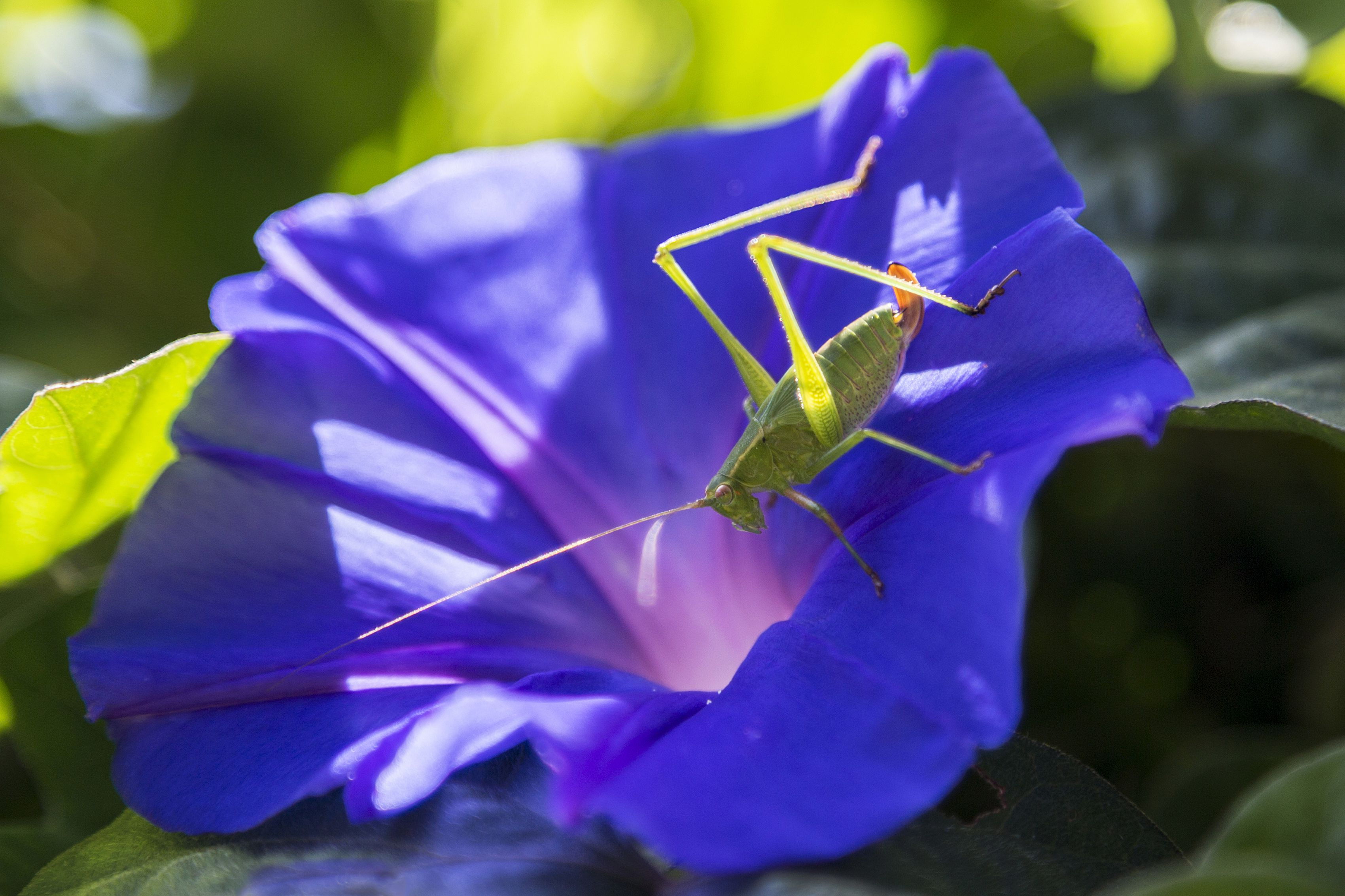 Can crickets really tell you the temperature outside buycottarizona Image collections