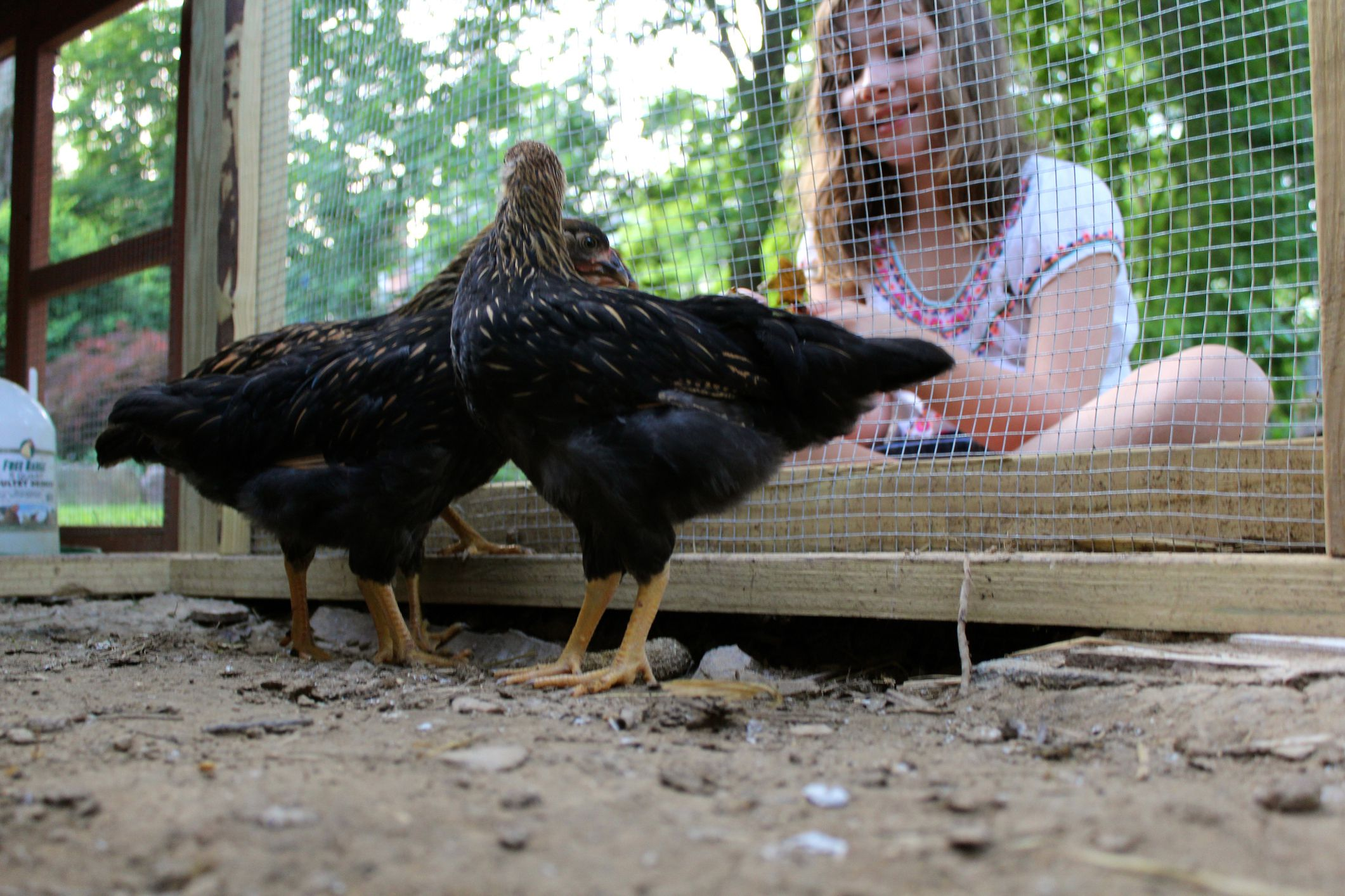 13 free chicken coop plans you can diy this weekend for Free chicken plans
