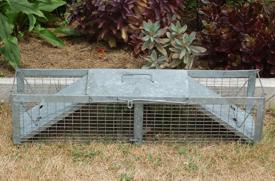 Image of a Havahart live animal trap.