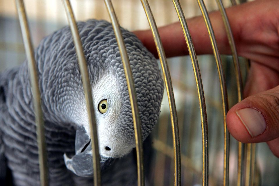 Flu Risk Sees Call For Ban On Bird Trade