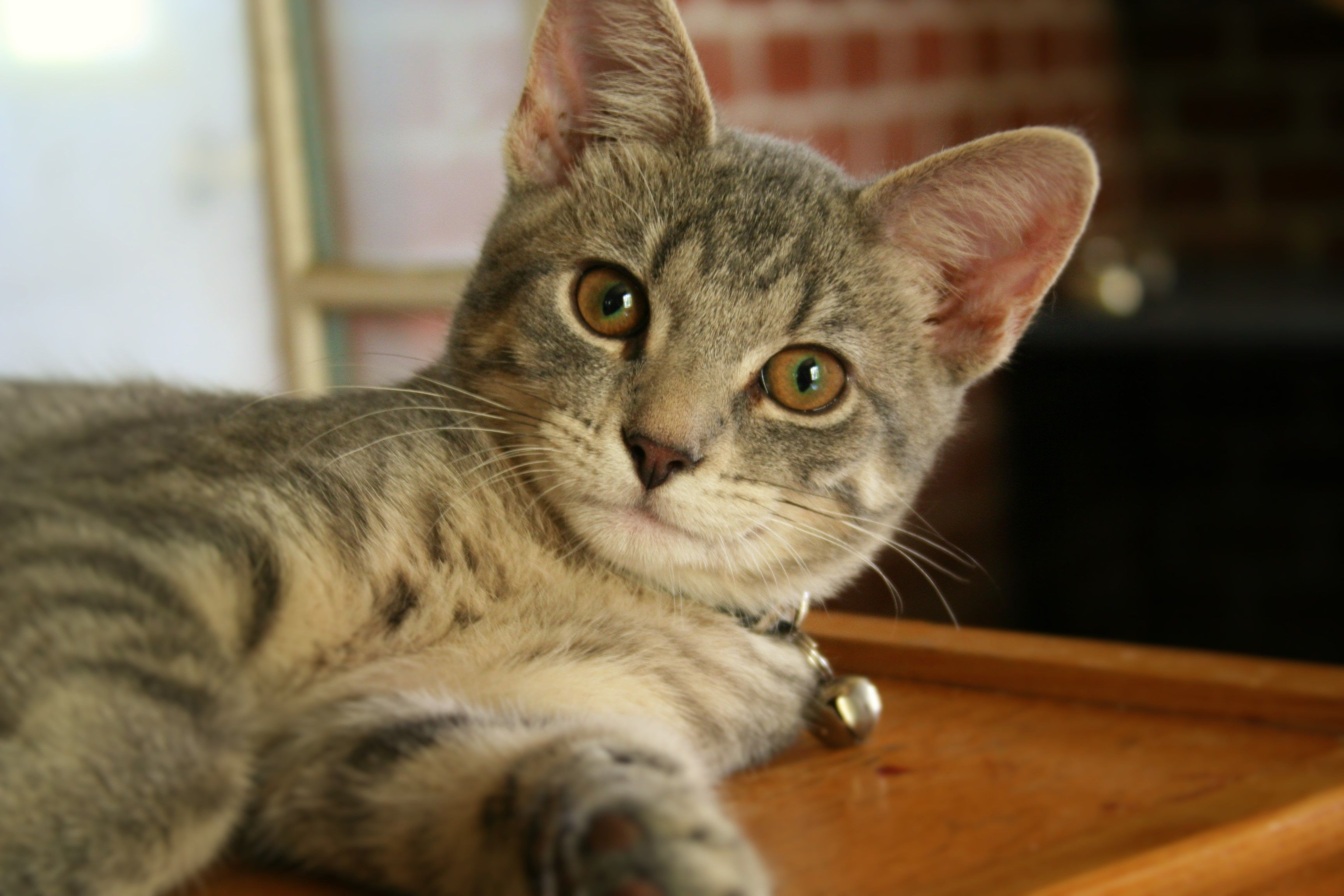Dehydration In Cats Symptoms Risk Factors And Treatments