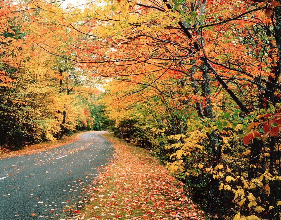 Fall Foliage Acadia National Park Maine