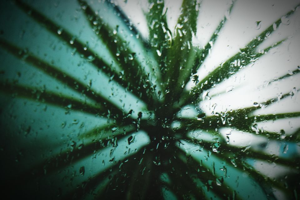Palm Trees Seen Through Wet Window In Rainy Season