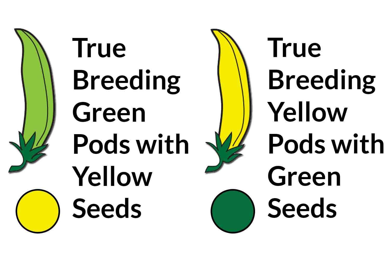 Carolina Biological Catalog