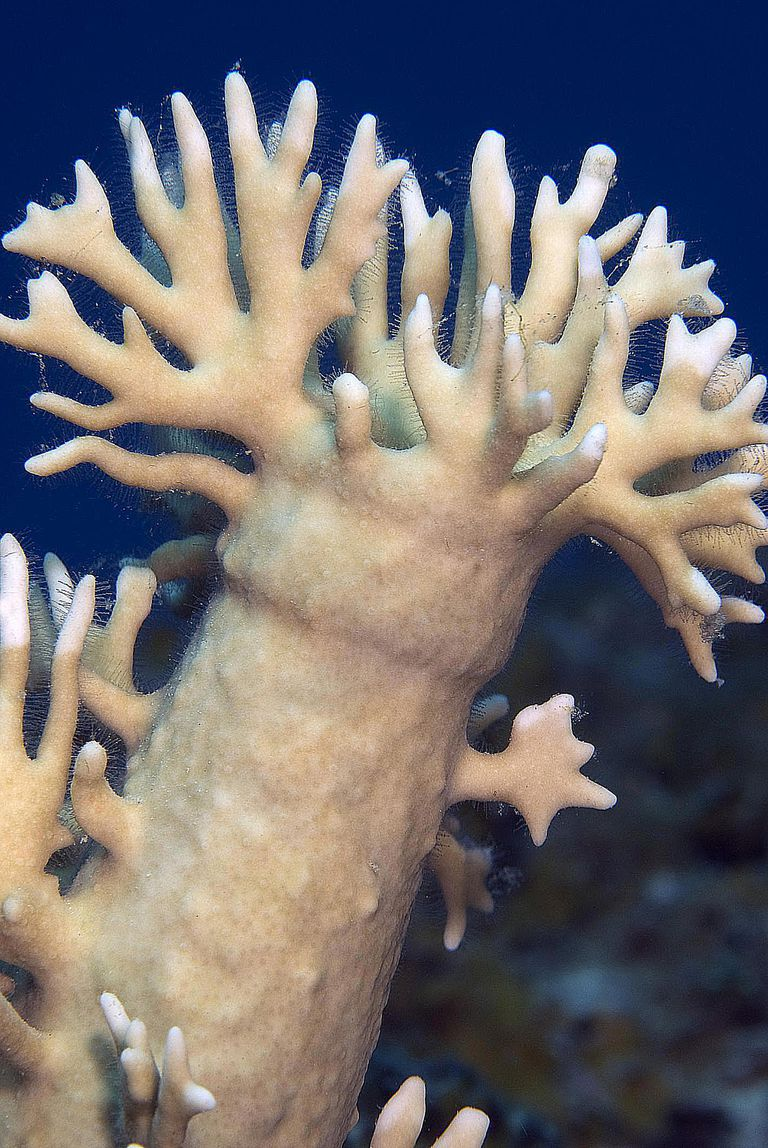 How to Identify Fire Coral and Treat Stings