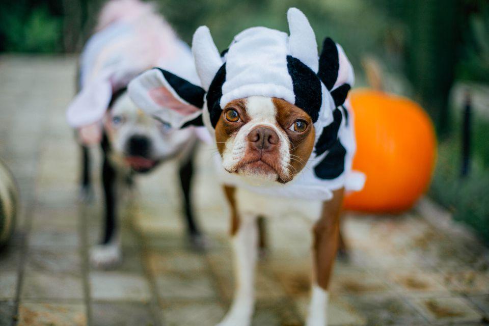 sad dog dressed in costume