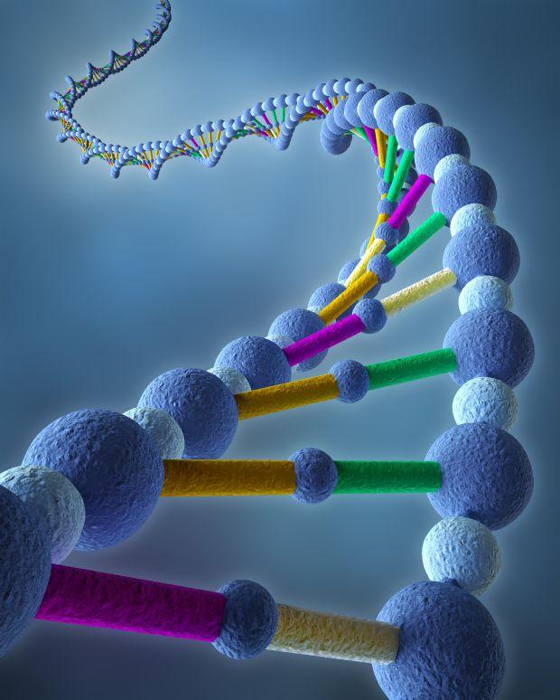 diagram of a strand of DNA illustrating genes