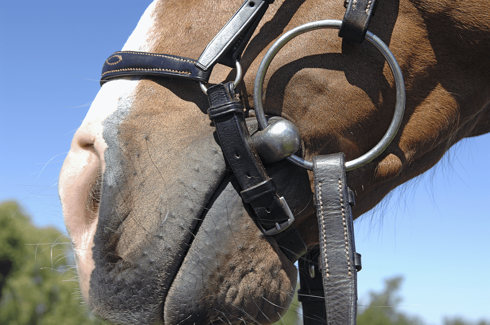 Close up of a horse carrying a loose ring snaffle bit.