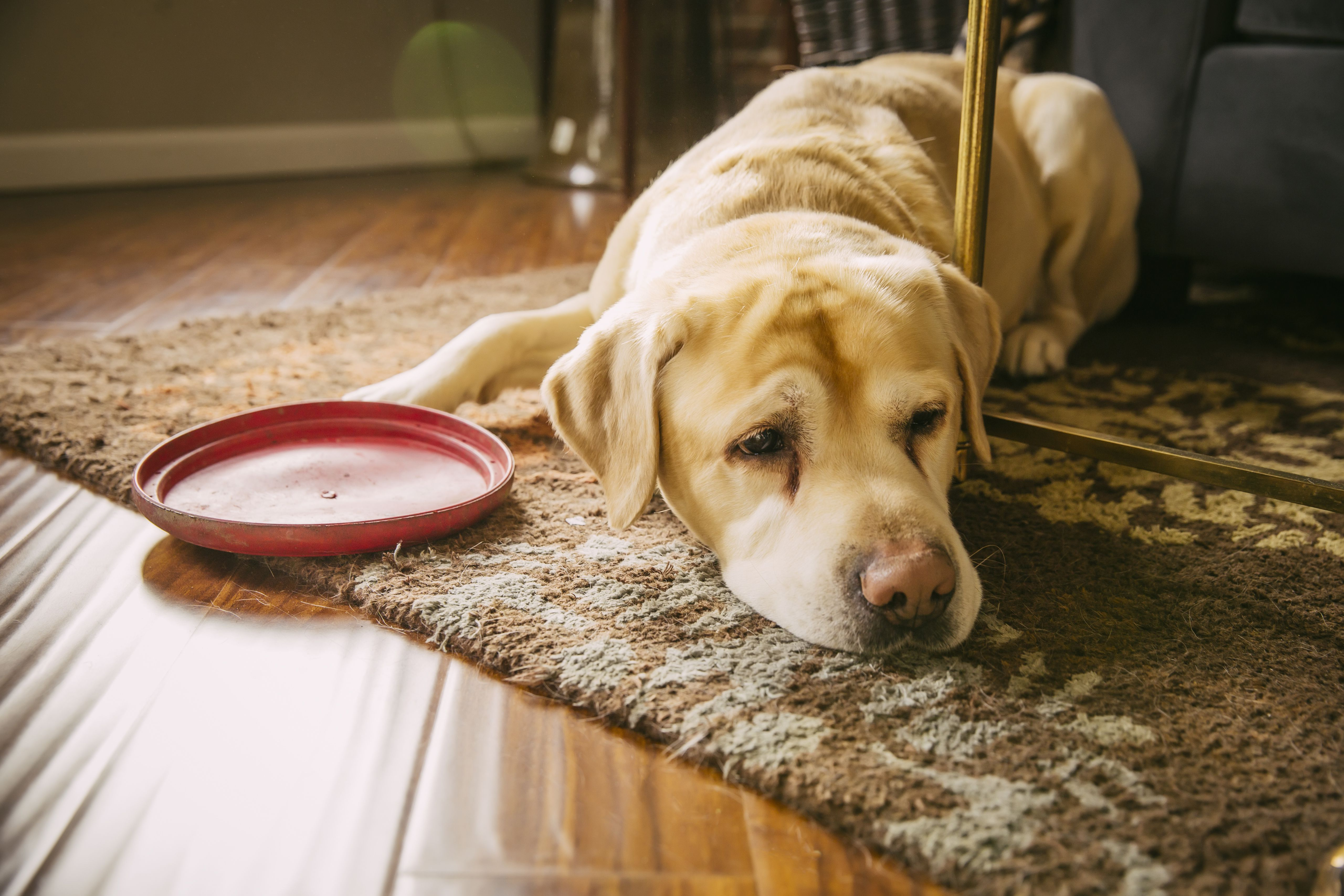 urinary problems in dogs are common