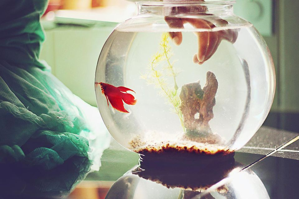Little girl is sitting on a counter, sunlight streaming from behind her as she sticks her fingers into a small fishbowl. her pet fish is swimming up toward her.