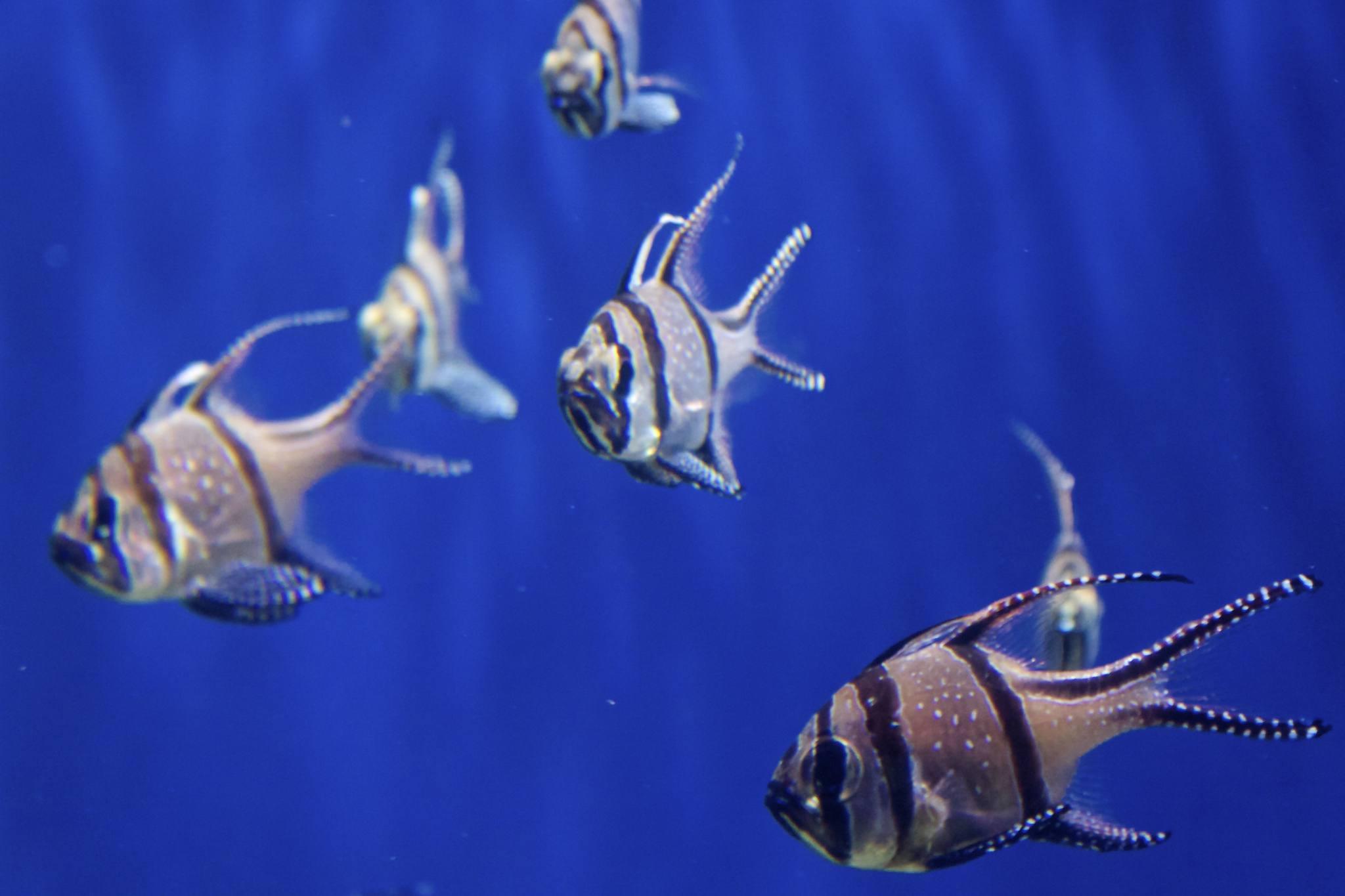 s of Saltwater Aquarium Fish