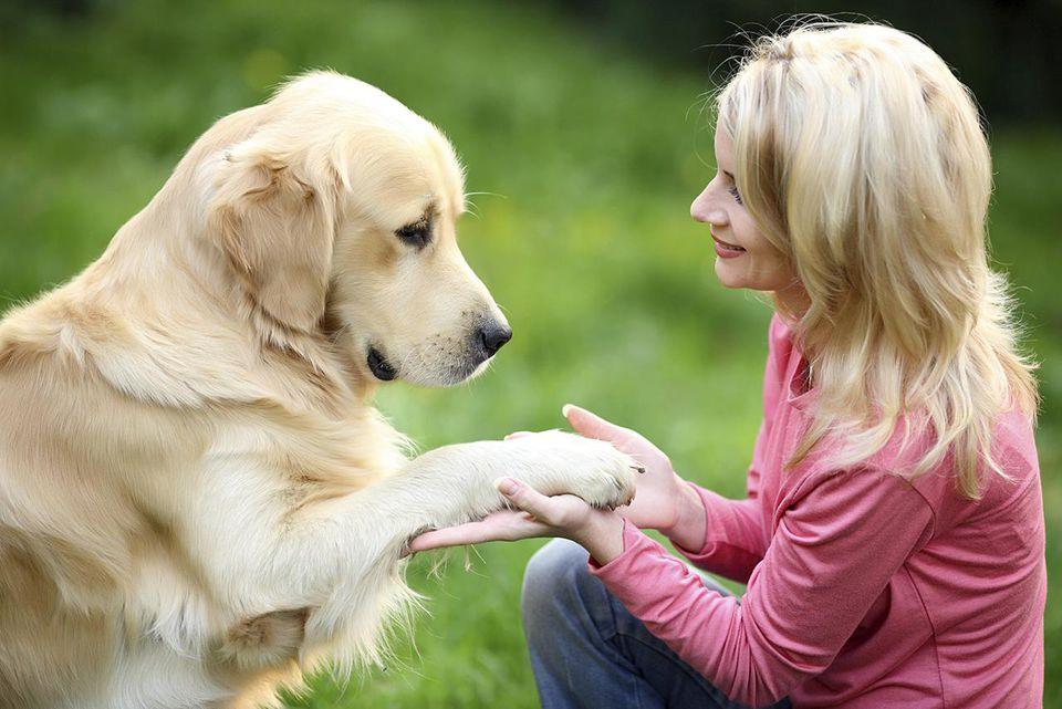 Young woman training a dog golden retriever.