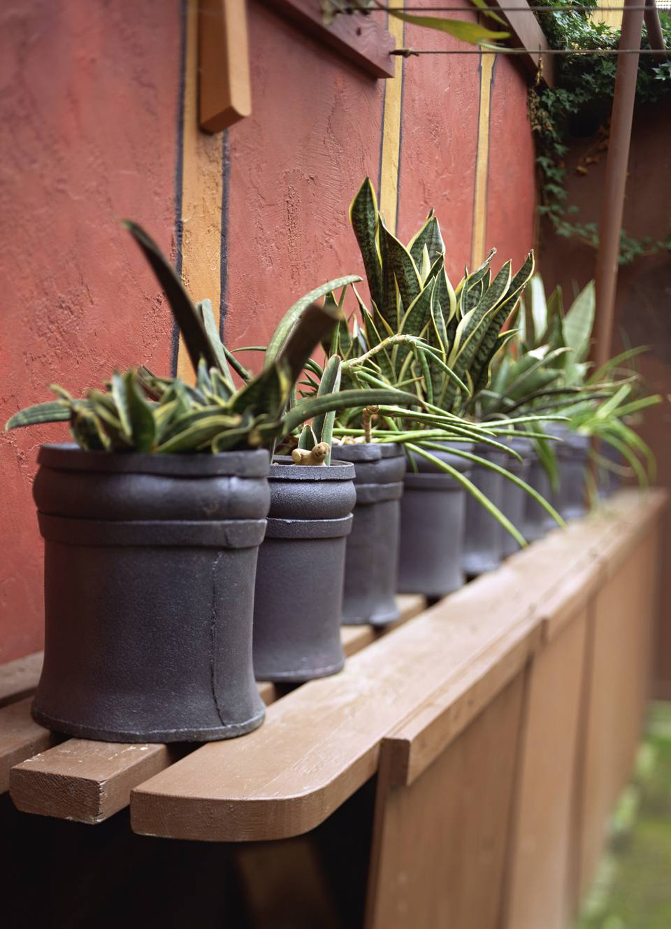Row of potted plants in black pots