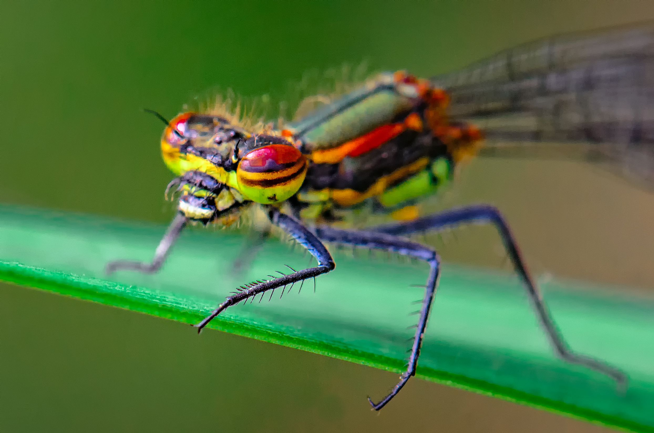 how to identify a bug or insect