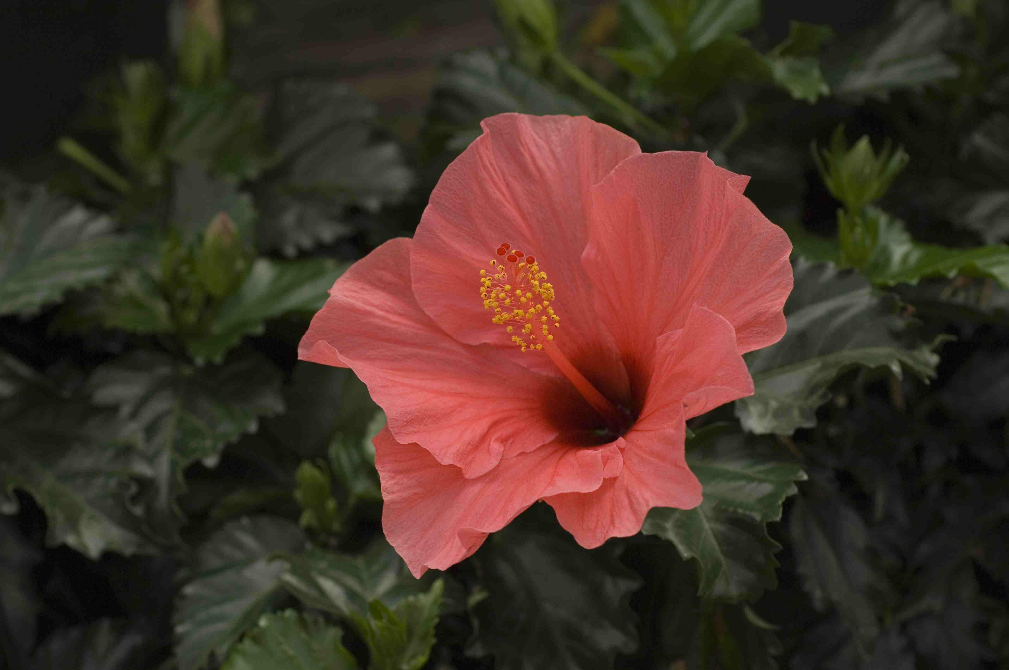 9 flowering houseplants izmirmasajfo Gallery