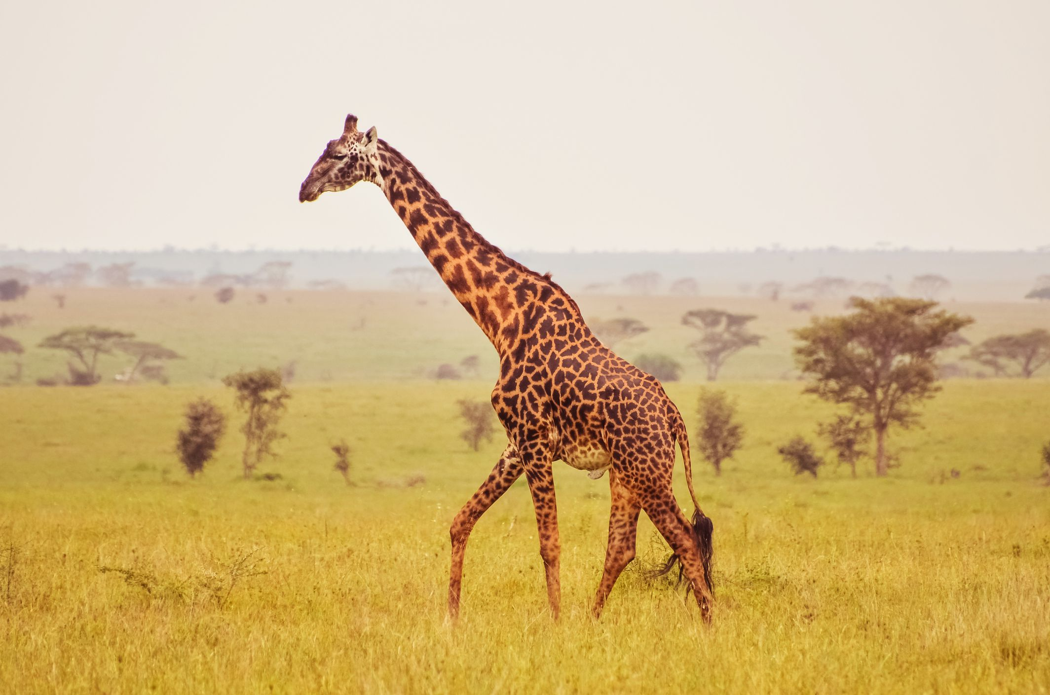 africa u0027s top 10 safari animals and where to see them