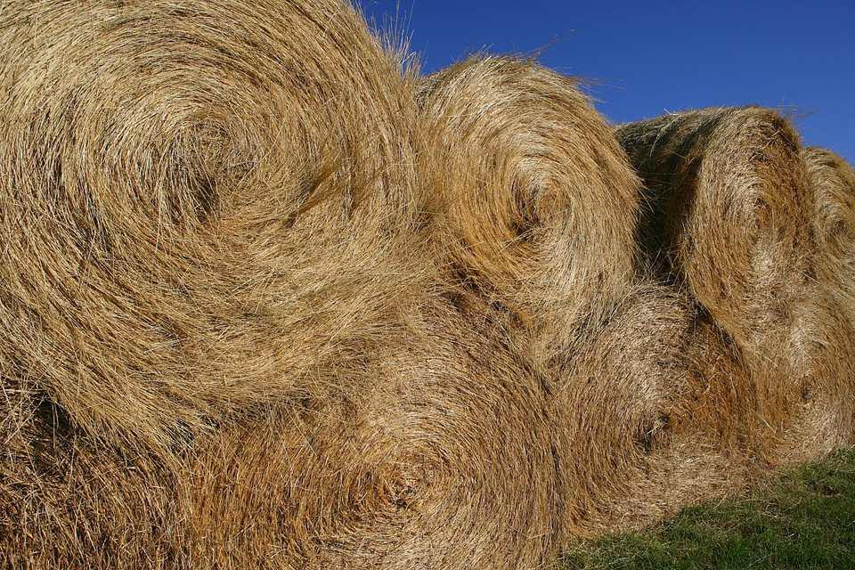 Pile of hay bales