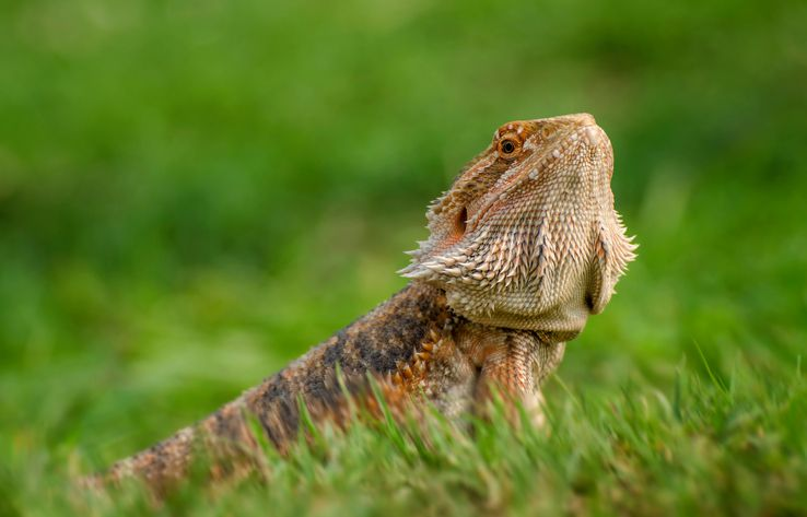 The 9 Best Bearded Dragon Supplies To Buy In 2018