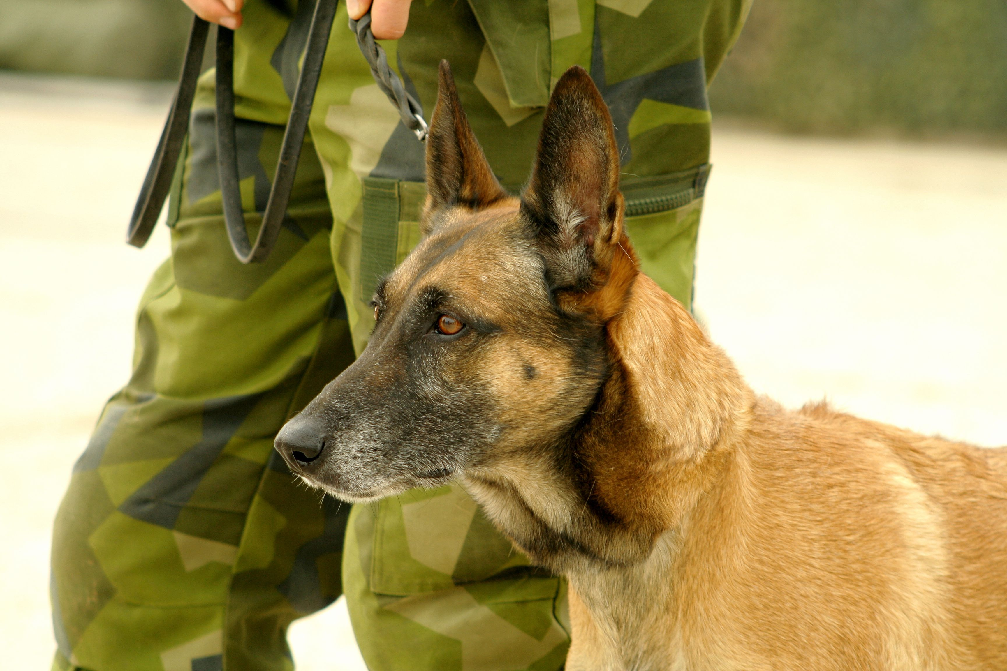 Air Force Names For Dogs