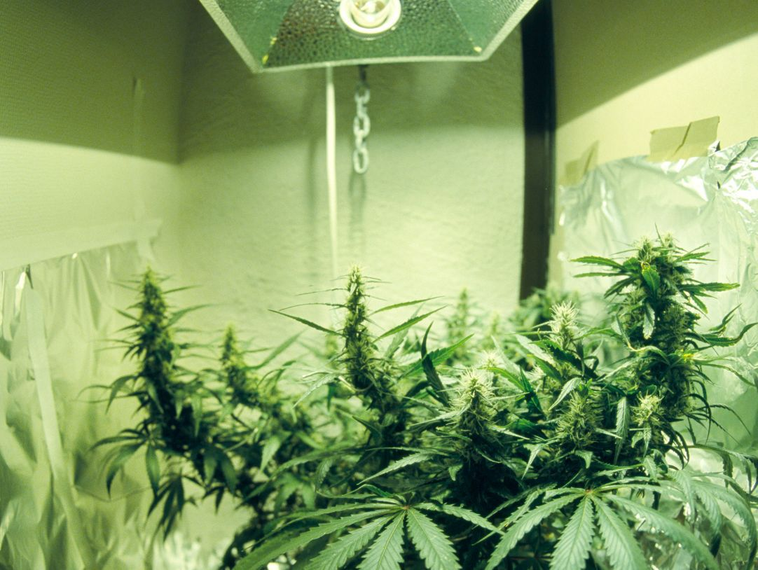 Remodeling The Marijuana Grow House Back To Normal