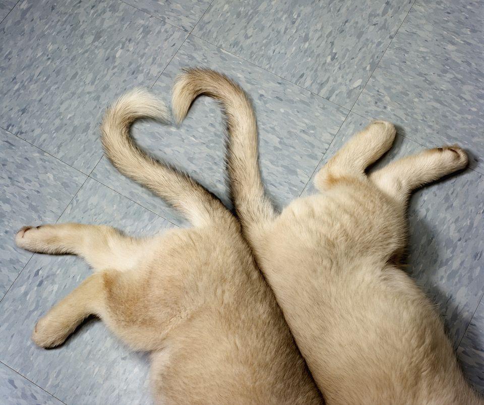 Tails in heart shape