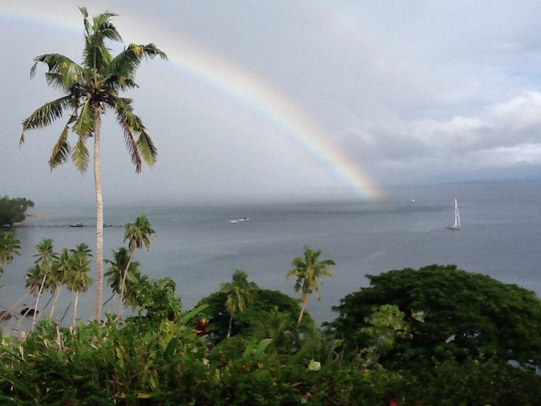Palm tree and rainbow