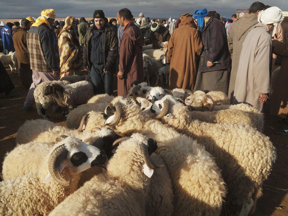 sheep-eid-morocco-getty.jpg