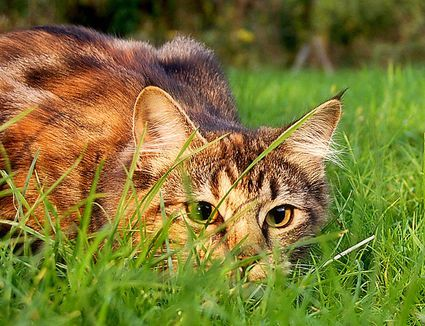 10 Ways to Keep Cats Out of Your Yard