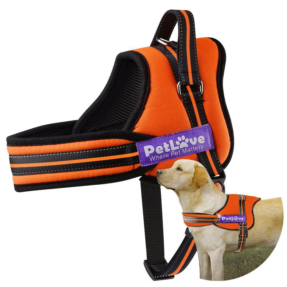 Best Leash For Hiking With Dog