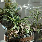Terrarium photograph
