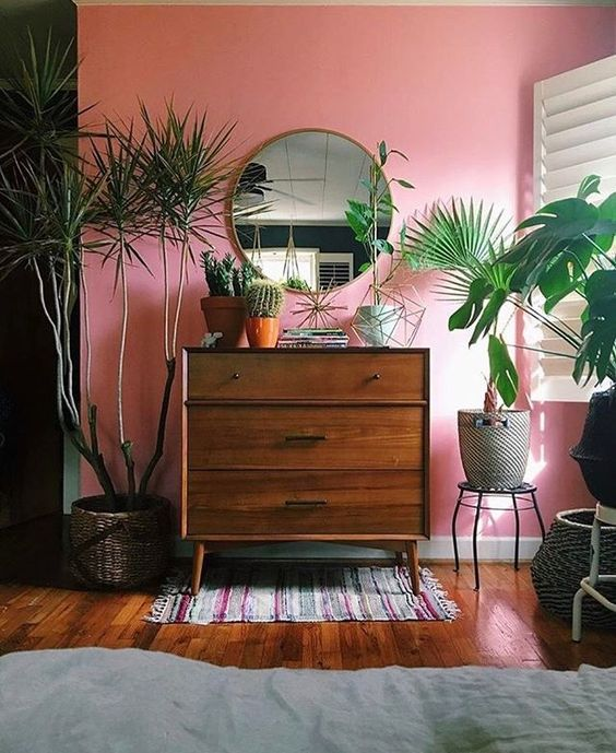 Room with pink walls and lush green plants