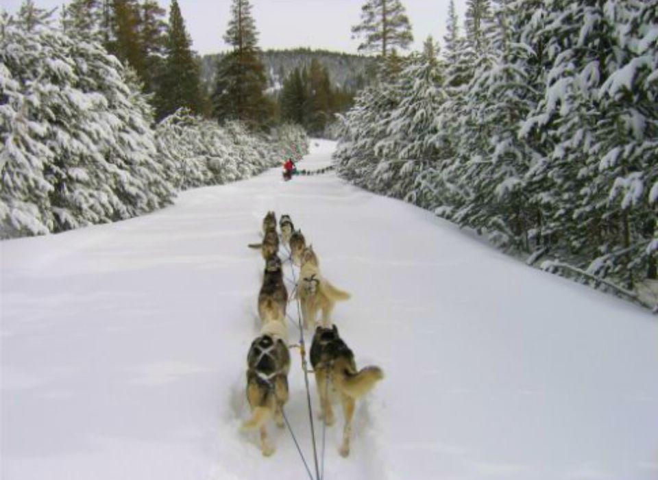 DogSledding_TahoeDogsled.jpg