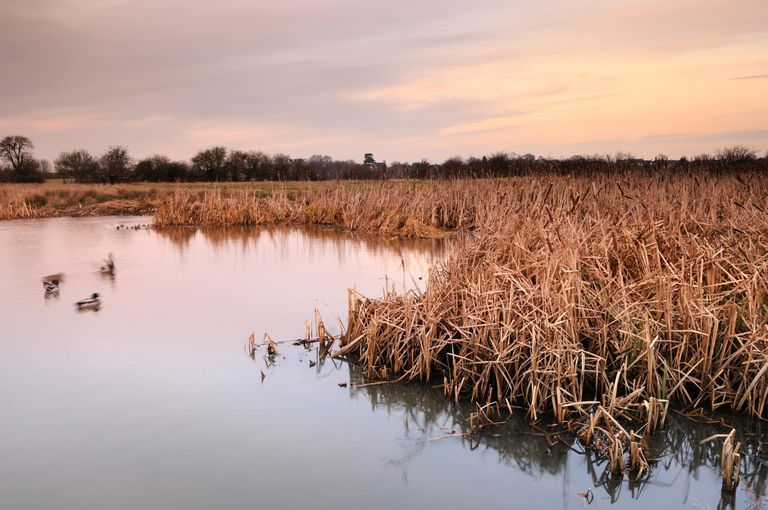 Marshland on a cold winter afternoon