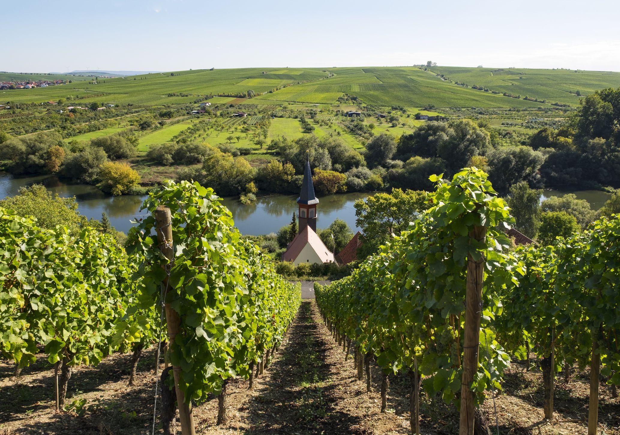 vineyard deutsch