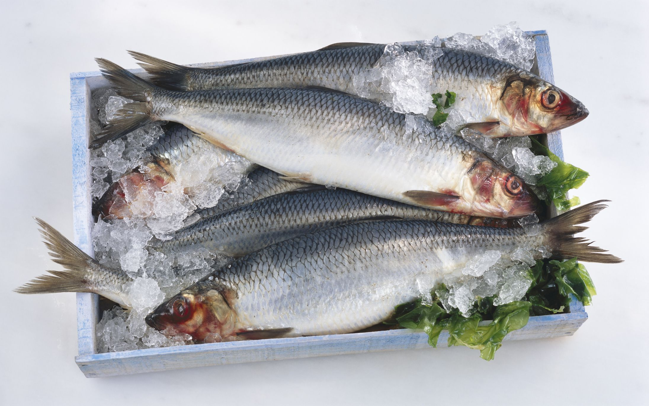 Top 8 fish for omega 3 fatty acids for What are fatty fish