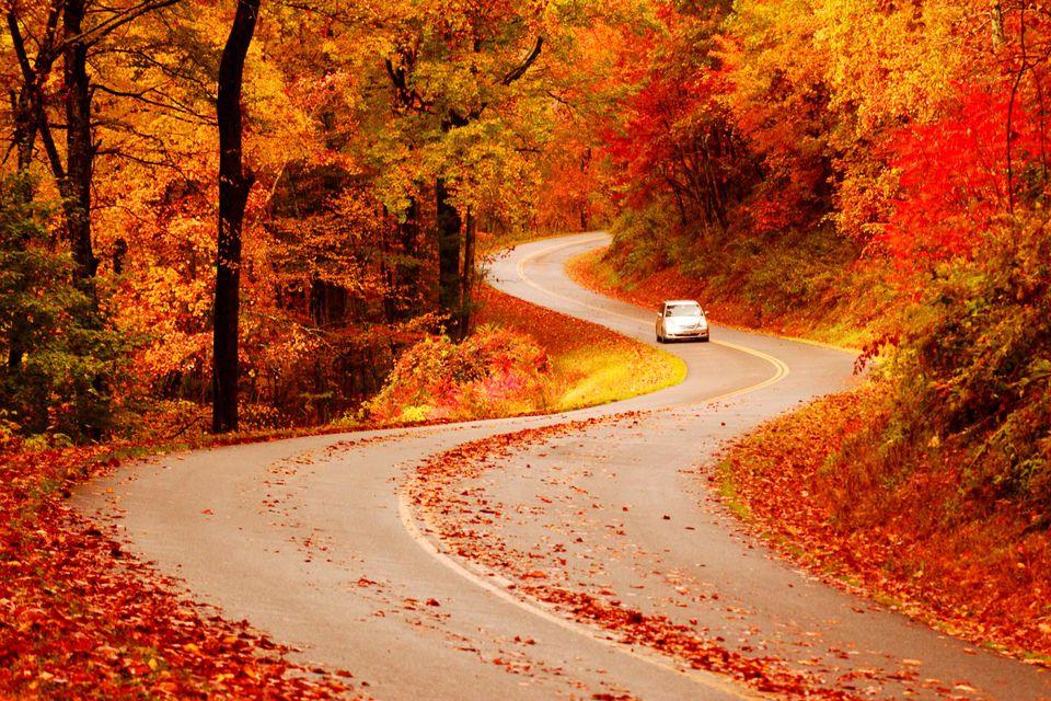 Fall Foliage Peak Periods In The Southeast - Us fall foliage map