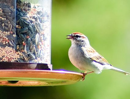 container food item feeders style feeder outdoor wild bird european
