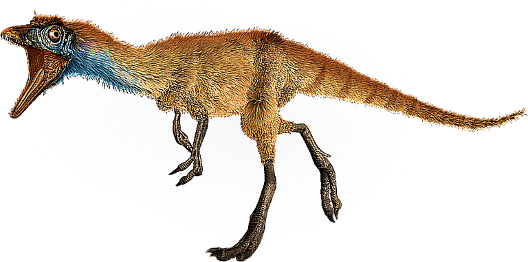 Image result for Compsognathus