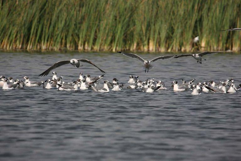pantanos-de-villa-aves.jpg