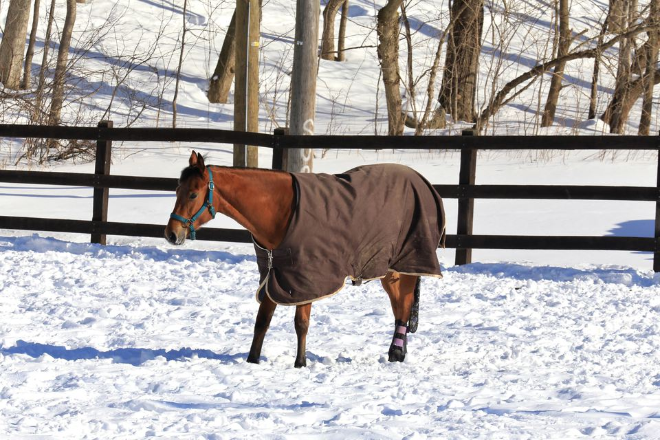 horse wearing blanket in winter field