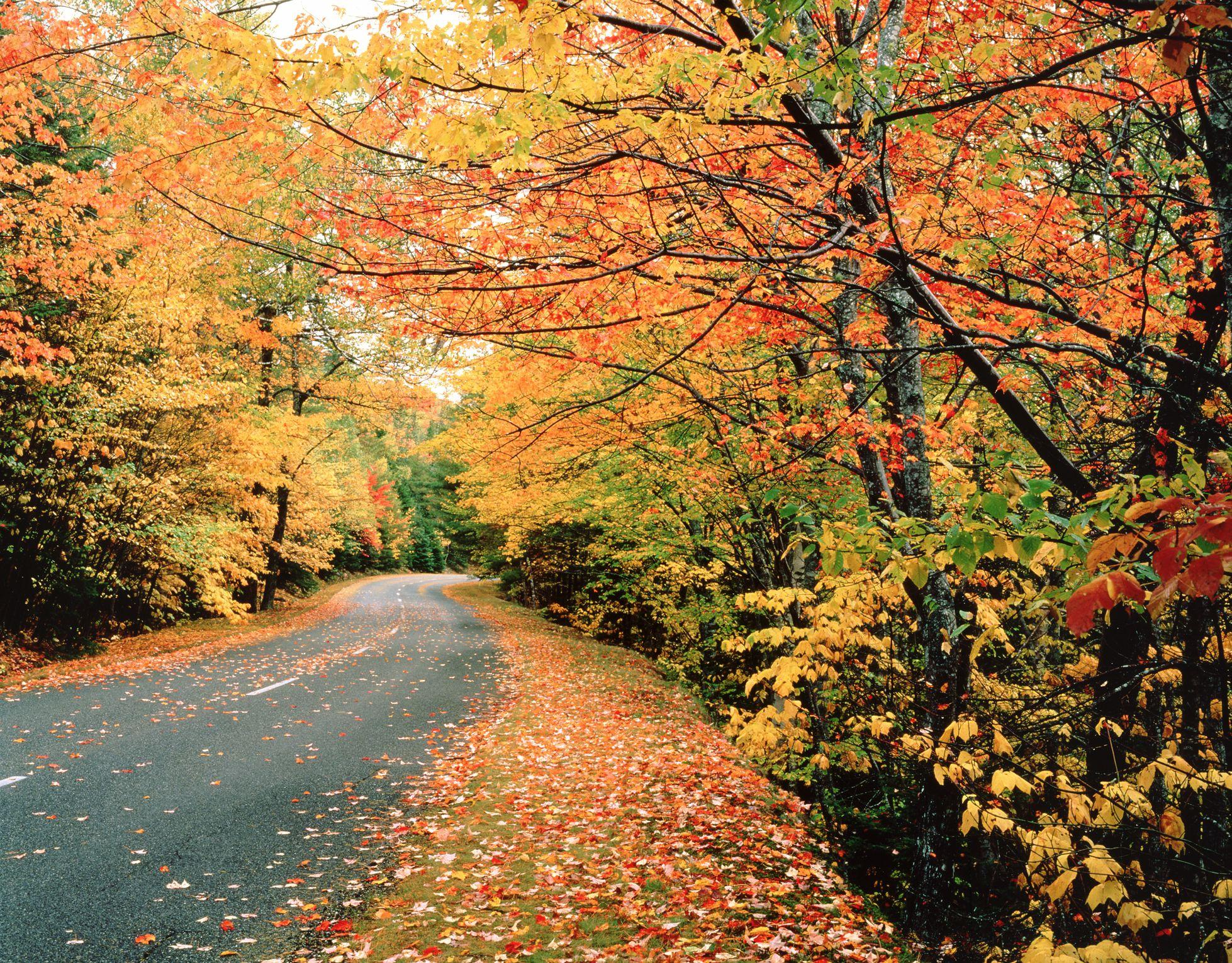 Best Maine Fall Foliage